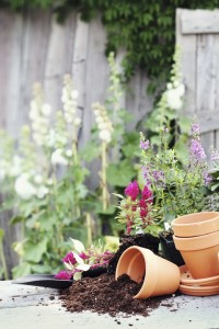 Planting pots with soil in a garden